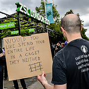 London Vegan Actions protest for the ending (Animals Zoo for Human) of 'Zoo Nights' and Zoo awareness outside the zoo for each Friday evening .The cages animals already suffered and without freedom, captivity animals only to entertainment the orgy drunken human very sad indeed at ZLS London Zoo.  A Zoo staffs desparate to scare of of bad publicity approach. Why you taking picture for? and after I finish a walk away she approach me again. What are you doing with the picture. The Zoo staffs is outside welcome people. they are sheep fellow order of maybe will lost their job. on the other hand the Vegan is not totally innocent telling people how to life their life in my opinion both are worng and rights on 7 June 2019. One greedy another so call caring animal rights. Why don't the protest against arms sale is big business.