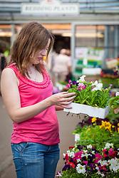Choosing bedding petunias at a garden centre