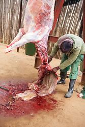 Skinning a Kudu
