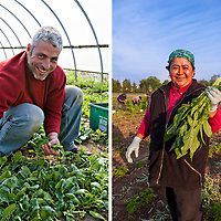 Organic farmer Rod Venturelli harvests early spring spinach in Plan B's hoop house. A smiling farm worker holding a large handful of freshly harvested dandelion greens against a blue sky at Pfenning's Organic Farm in Ontario.