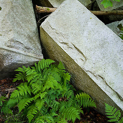 Ferns grow next to granite blocks from an abandoned bridge in New Hampshire's White Mountains.