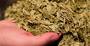 A handful of hops, before it's added into the beer brewing process. Lou Lenz, owner of the Kaskaskia Brewing Company, measures all his ingredients very carefully as he works from a special recipe of his own making.