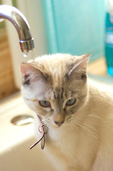 Cate the cat plays in the water
