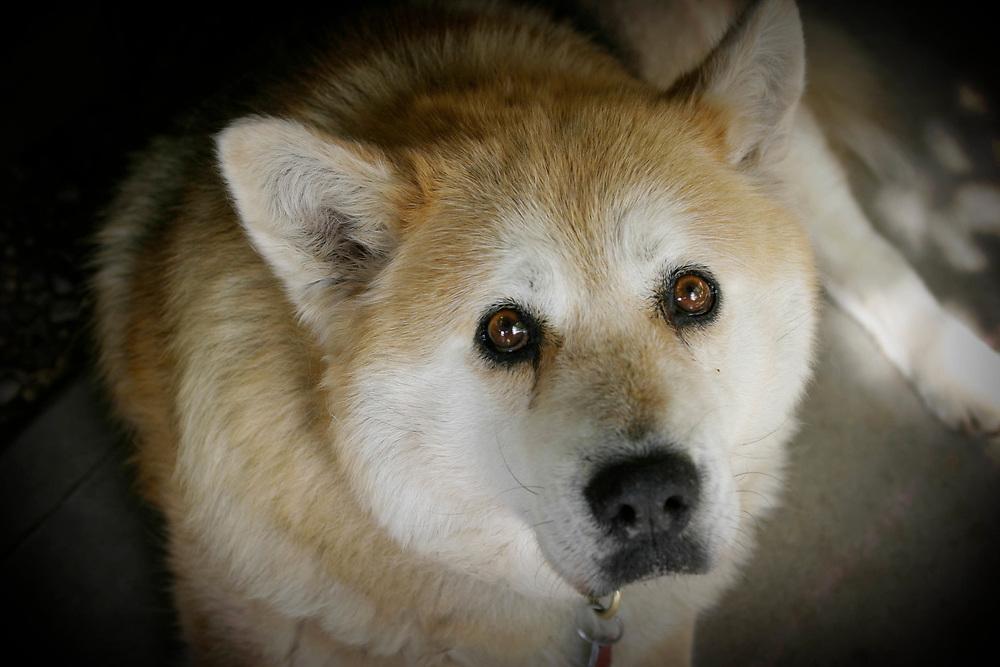 Dog, New Mexico, USAUSA