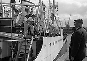 With her cargo of 600 tonnes of foodstuff, drugs and blankets for famine ridden Biafra, the Irish mercy ship Columcille sails out of Dublin, with Captain P. O'Saeghdha in command and a crew of 12, among which is a seaman priest, Rev. Fr. Joseph Fitzgibbon, the Limerick born Holy Ghost Father, who has volunteered as third engineer on the vessel.<br /> 06.09.1968