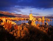 Tufa towers along the shore of Mono Lake illuminated at sunrise, Mono Lake Tufa State Reserve and Mono Basin National Forest Scenic Area, Inyo National Forest, California.