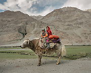 Brother and sister travelling on the back of a yak. The traditional life of the Wakhi people, in the Wakhan corridor, amongst the Pamir mountains.