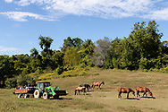 People tour Iron Horse Sanctuary, Inc.is a 501C3 Not For Profit and is home to over 50 animals saved from slaughter, neglect and abuse. in Goshen, New York, on Sept.20, 2020.