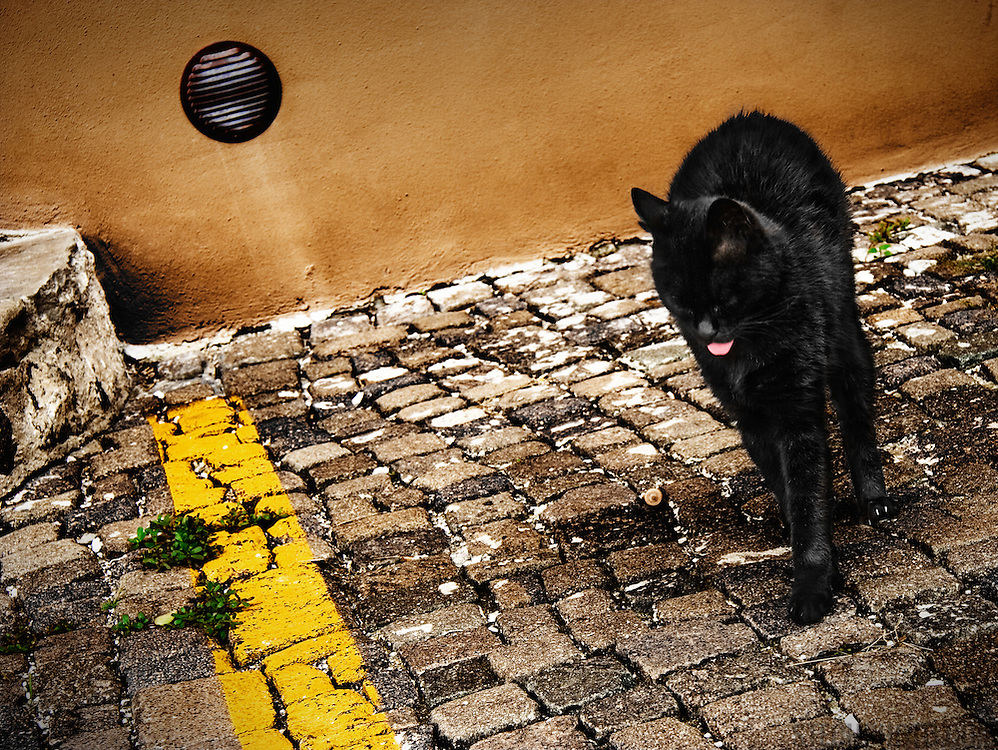 A black cat stretching and expressing it's displeasure on a street in the city of Gorizia, Italy.<br /> <br /> + ART PRINTS +<br /> To order prints or cards of this image, visit:<br /> http://greg-stechishin.artistwebsites.com/featured/sourpuss-greg-stechishin.html