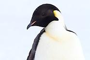 Antarctica & Subantarctic