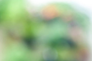 Green garden blurred background