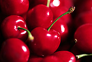Close up photograph of Bing Cherries