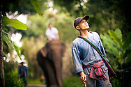 chiang mai thailand golden triangle elephant trekking chiang rai thailand