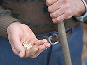 Local farmer holding seeds in the Dordogne region, France