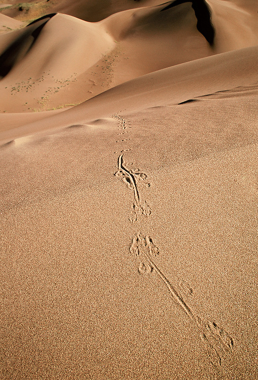 The tracks left by a nocturnal kangaroo rat top a high dune. Whenever I look at this shot, I wonder how long the little critter paused at the top to rest and survey the view.