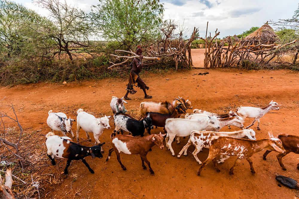 Hamer tribe herding goats, Omo Valley, Ethiopia.