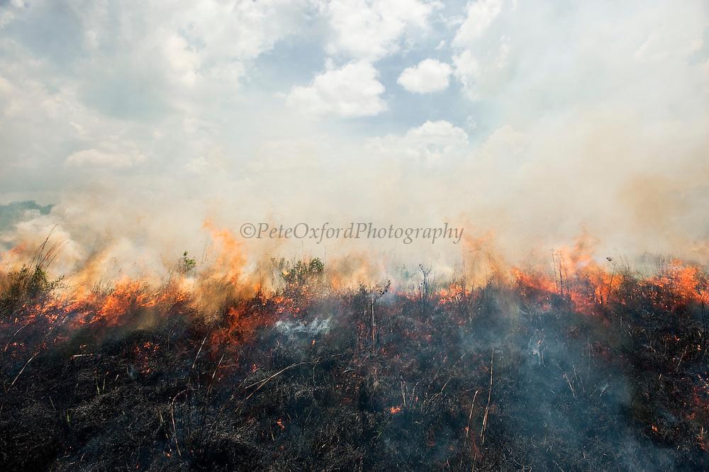 Savannah Fire<br /> Rupununi<br /> GUYANA<br /> South America