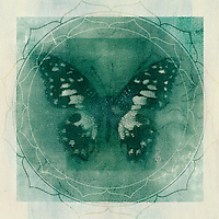 Photo based illustration, black and white alternative print, of a butterfly with yogic symbolism. Green denotes the heart chakra.