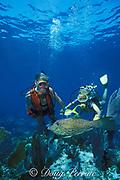 divers and scrawled filefish or scribbled filefish, Aluterus scriptus, Molasses Reef, Key Largo, Florida Keys National Marine Sanctuary, Florida ( Western Atlantic Ocean )  <br /> MR 70, MR 71