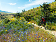 Mountain biker rides along the Military Reserve Connection Trail in the midst of spring wildflowers.