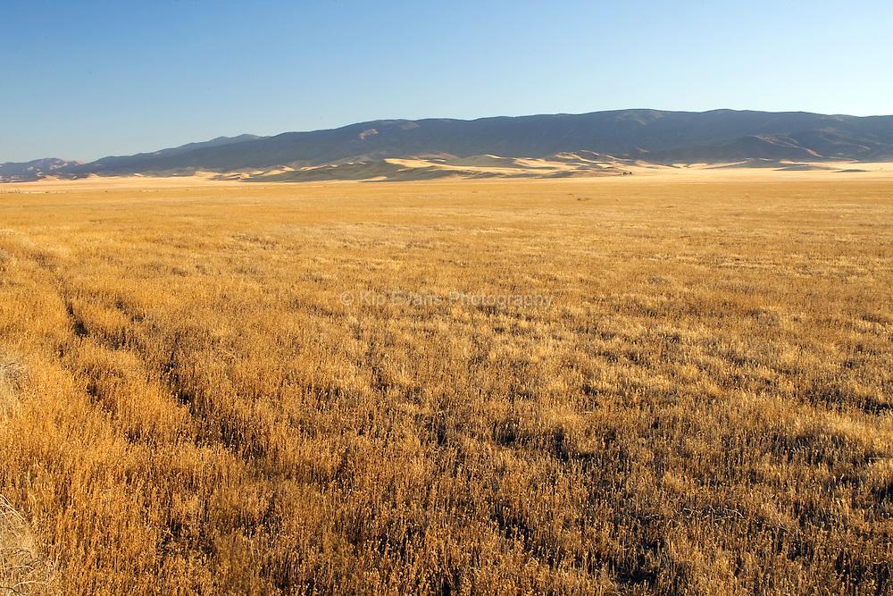 Carrizo Grassland
