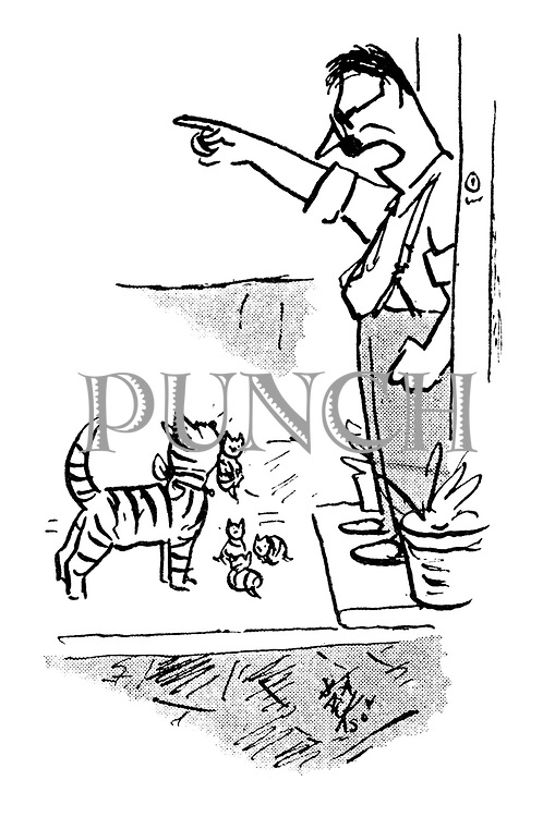 (A cat with her litter is thrown out of the house by her owner)