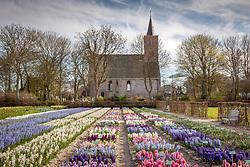 Hyacinths at Hortus Bulborum