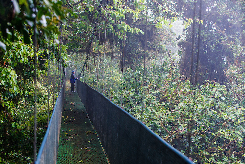 Hiker on hanging bridge at Sky Walk Costa Rican Adventures park near Monteverde Cloud Forest Preserve, Costa Rica. Captive.