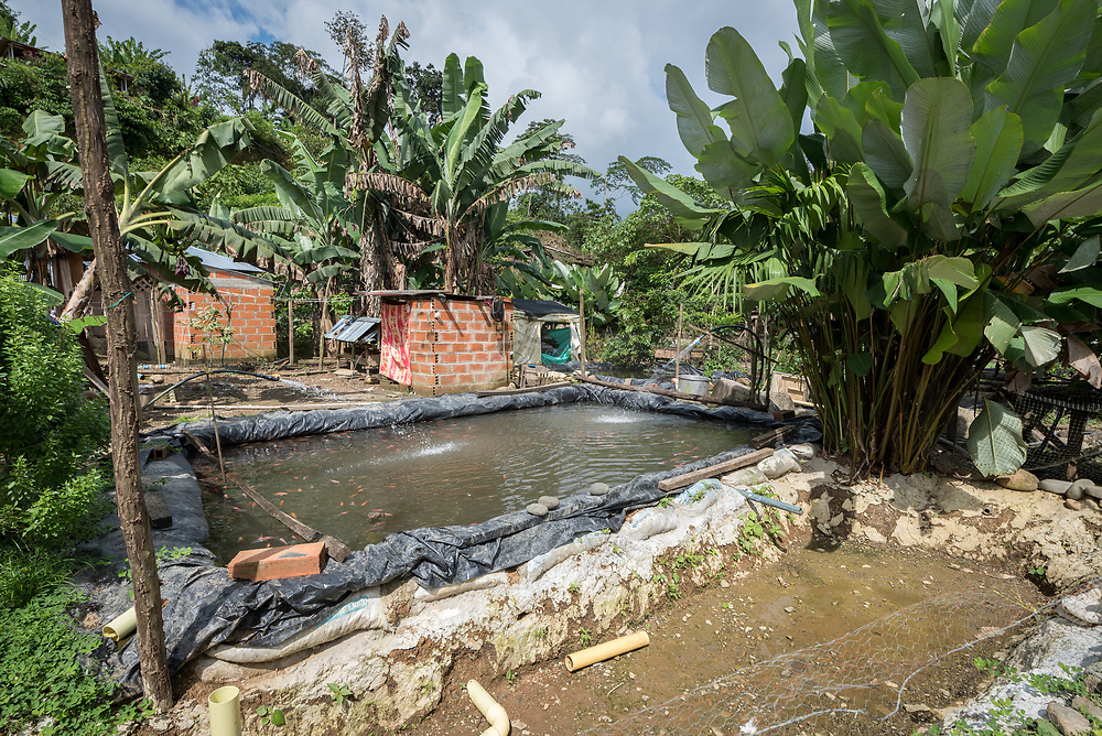 16 November 2018, San José de León, Mutatá, Antioquia, Colombia: Water pipes ensure oxygen flow through fish farming tanks in San José de León. Following the 2016 peace treaty between FARC and the Colombian government, a group of ex-combatant families have purchased and now cultivate 36 hectares of land in the territory of San José de León, municipality of Mutatá in Antioquia, Colombia. A group of 27 families first purchased the lot of land in San José de León, moving in from nearby Córdoba to settle alongside the 50-or-so families of farmers already living in the area. Today, 50 ex-combatant families live in the emerging community, which hosts a small restaurant, various committees for community organization and development, and which cultivates the land through agriculture, poultry and fish farming. Though the community has come a long way, many challenges remain on the way towards peace and reconciliation. The two-year-old community, which does not yet have a name of its own, is located in the territory of San José de León in Urabá, northwest Colombia, a strategically important corridor for trade into Central America, with resulting drug trafficking and arms trade still keeping armed groups active in the area. Many ex-combatants face trauma and insecurity, and a lack of fulfilment by the Colombian government in transition of land ownership to FARC members makes the situation delicate. Through the project De la Guerra a la Paz ('From War to Peace'), the Evangelical Lutheran Church of Colombia accompanies three communities in the Antioquia region, offering support both to ex-combatants and to the communities they now live alongside, as they reintegrate into society. Supporting a total of more than 300 families, the project seeks to alleviate the risk of re-victimization, or relapse into violent conflict.
