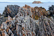 Oceania; Australia; Australian; Down Under; Tasmania, Tarkine Coast;