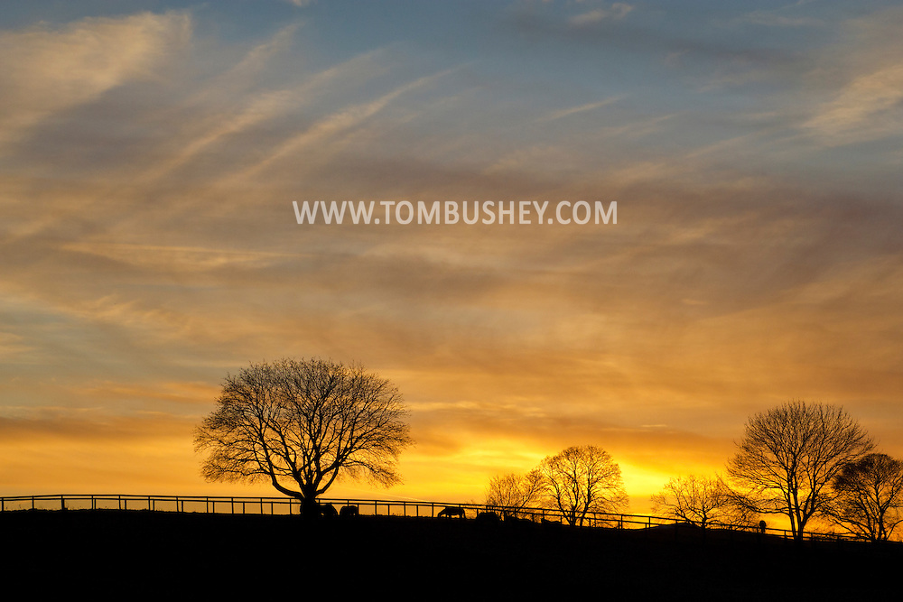 Montgomery, New York -Trees and horses are seen in silhouette in front of colorful clouds at sunset at Cameo Hills horse farm on Dec. 23, 2012.