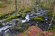 The Torrent Walk, Dolgellau, Snowdonia National Park, Wales