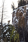 Bighorn ram and steep canyon.