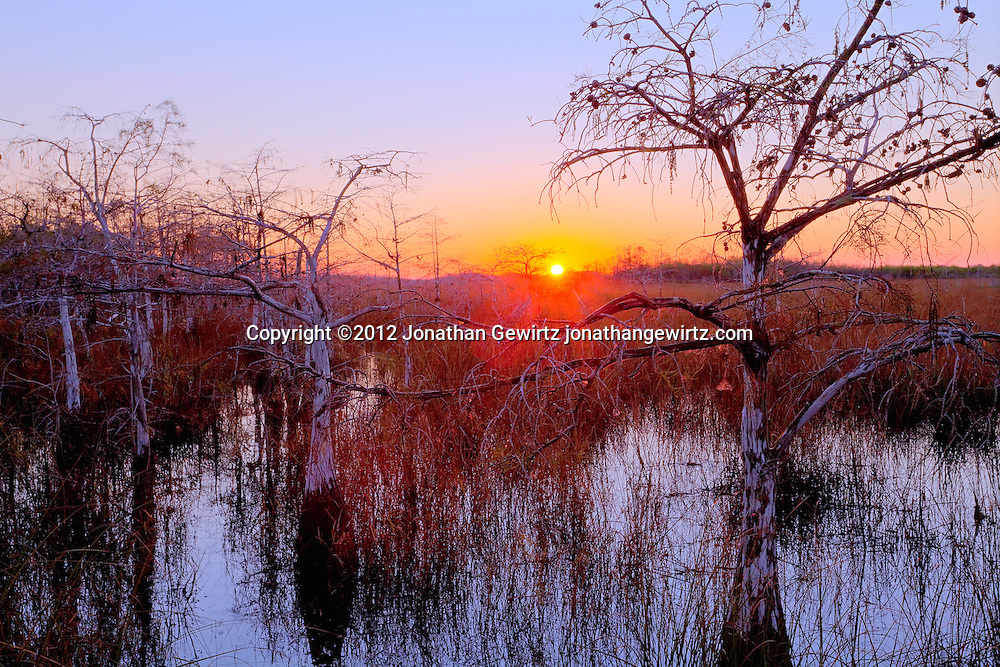 The rising sun backlights dwarf cypress trees in a wetland near Pa-hay-okee Overlook in Everglades National Park, Florida. WATERMARKS WILL NOT APPEAR ON PRINTS OR LICENSED IMAGES.<br /> Licensing: https://tandemstock.com/assets/74724832