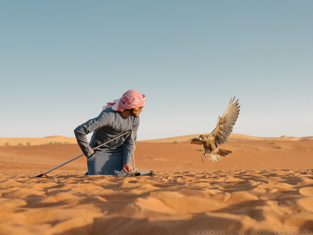 A falcon show at the luxurious Qasr Al Sarab resort, in the Liwa Desert. Set in the middle of the Rub' al Khali or Empty Quarter, the largest uninterrupted sand mass in the world, Qasr Al Sarab Desert Resort by Anantara is isolated from the outside world, but only 200km away from Abu Dhabi.