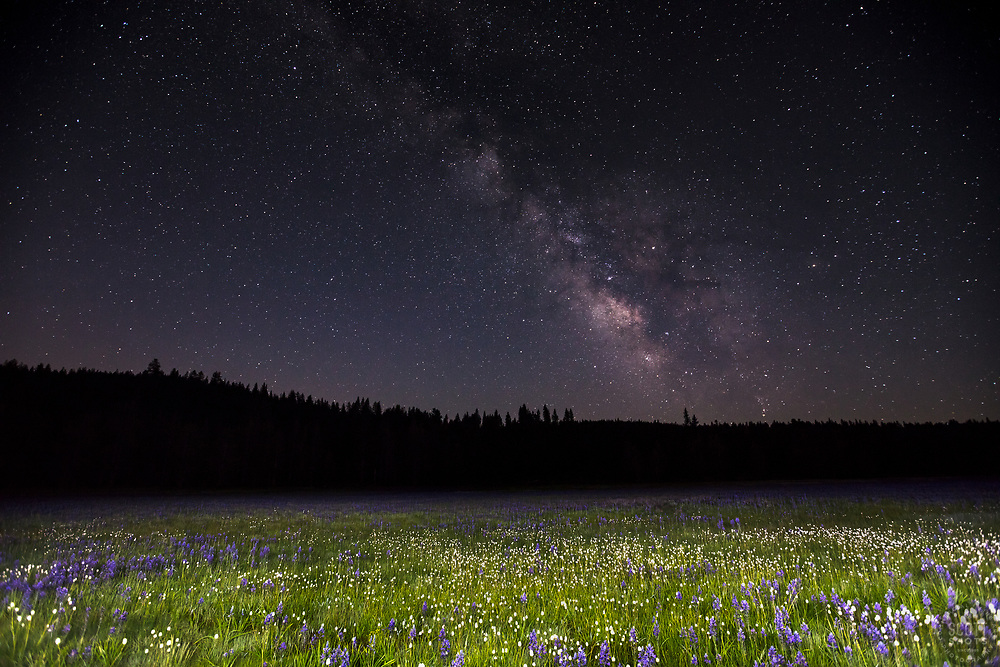 """""""Milky Way Above Sagehen Meadows 1"""" - Photograph of the Milky Way and other stars above a field of Camas wildflowers at Sagehen Meadows, near Truckee, California."""