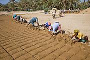 Workers make mud bricks near Al-Hawta, near Shibam, Hadhramawt, Yemen.