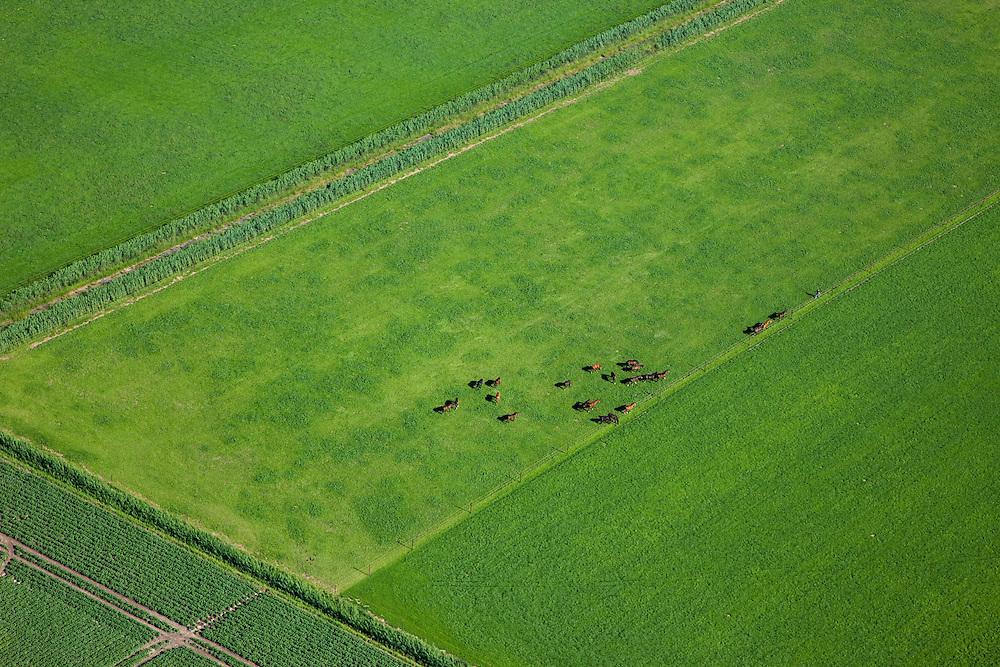 Nederland, Zuid-Holland, Hoeksche Waard, 12-06-2009; Paarden worden uit het weiland gehaald.Swart collectie, luchtfoto (toeslag); Swart Collection, aerial photo (additional fee required).foto Siebe Swart / photo Siebe Swart