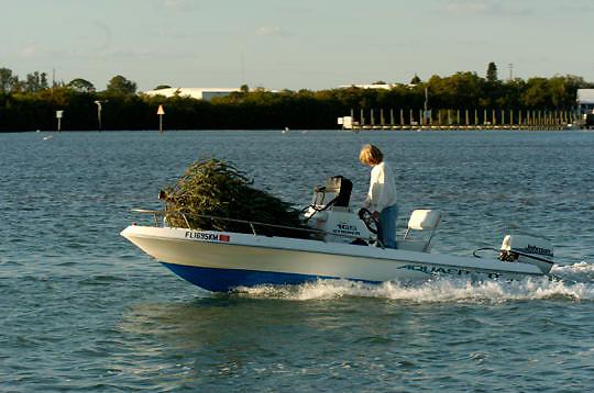 Transferring Christmas tree home on boat. Near Boca Grande, Florida.