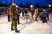 Greenpeace Finland campaigner Matti Ikonen at a Reindeer roundup at Vuomaselkä, Lapland, where semi-domesticated deer are sorted and seperated for breeding, slaughter, returned to their owners, injected for parasites, or released back into the forest.
