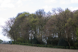 Wendover, UK. 4th May, 2021. Jones Hill Wood, ancient woodland in the Chilterns AONB, is viewed across farmland. A large section of the woodland, which contains resting places and/or breeding sites for pipistrelle, barbastelle, noctule, brown long-eared and natterer's bats and is said to have inspired Roald Dahl's Fantastic Mr Fox, is being felled for the HS2 high-speed rail link after a High Court judge refused an application for judicial review and lifted an injunction.