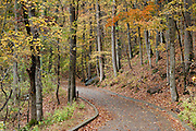 A paved walkway descends through hardwood forest. Mammoth Cave National Park was established in 1941 in Edmonson County, Kentucky, USA and was declared a UNESCO World Heritage Site in 1981 and international Biosphere Reserve in 1990.
