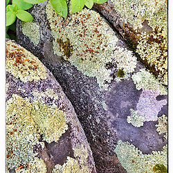 "Lichen on rocks on a stone wall in Odiorne Point State Park in Rye, New Hampshire. iPhone photo - suitable for print reproduction up to 8"" x 12""."