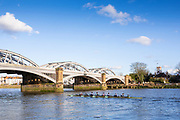 Barnes Greater London. 1st March 2020 <br />  Pre Boat Race Fixture, Cambridge University Boat Club, Goldie Returning to Putney approaching Barnes Rail Bridge,  Championship Course, Putney to Mortlake, River Thames, [Mandatory Credit: Peter SPURRIER/Intersport Images],