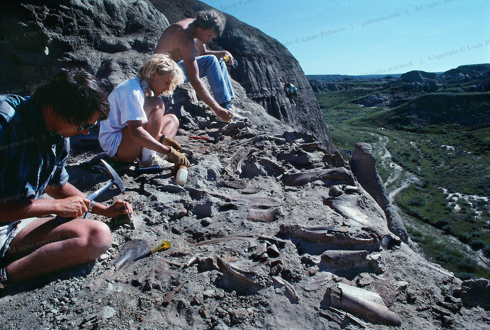 Paleontologist Phil Currie's, far right, excavates a herd of Centrosaurs at Dinosaur Provincial Park.  The herd may have died in the Cretaceous when they tried to navigate a river.  The bone bed extends to the opposite cliffs.