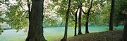 Trees in Ozark AR