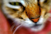 Extreme closeup portrait of a cat with selective focus