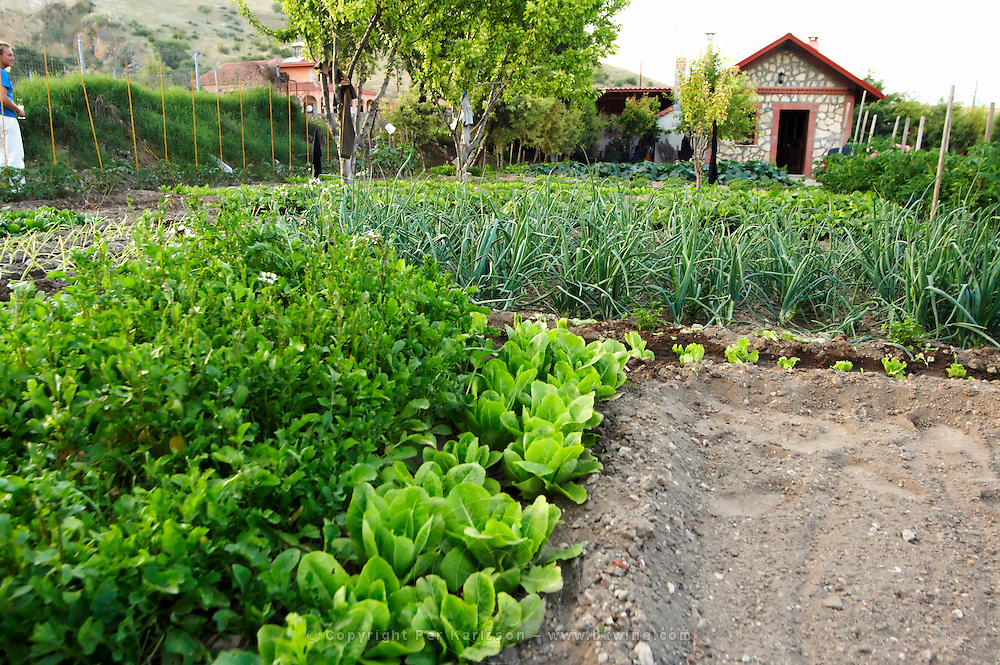 In the kitchen vegetable potager garden. Kontosoros restaurant and guest house, Xino Nero, Amyndeo, Macedonia, Greece