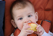 Baby boy eats an apple model released