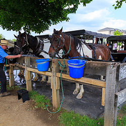 Bird-in-Hand, PA - June 1, 2016: <br /> An attendent provides fresh water to horses used to take tourists on a horse-drawn wagon  on rural roads in Lancaster County, PA.